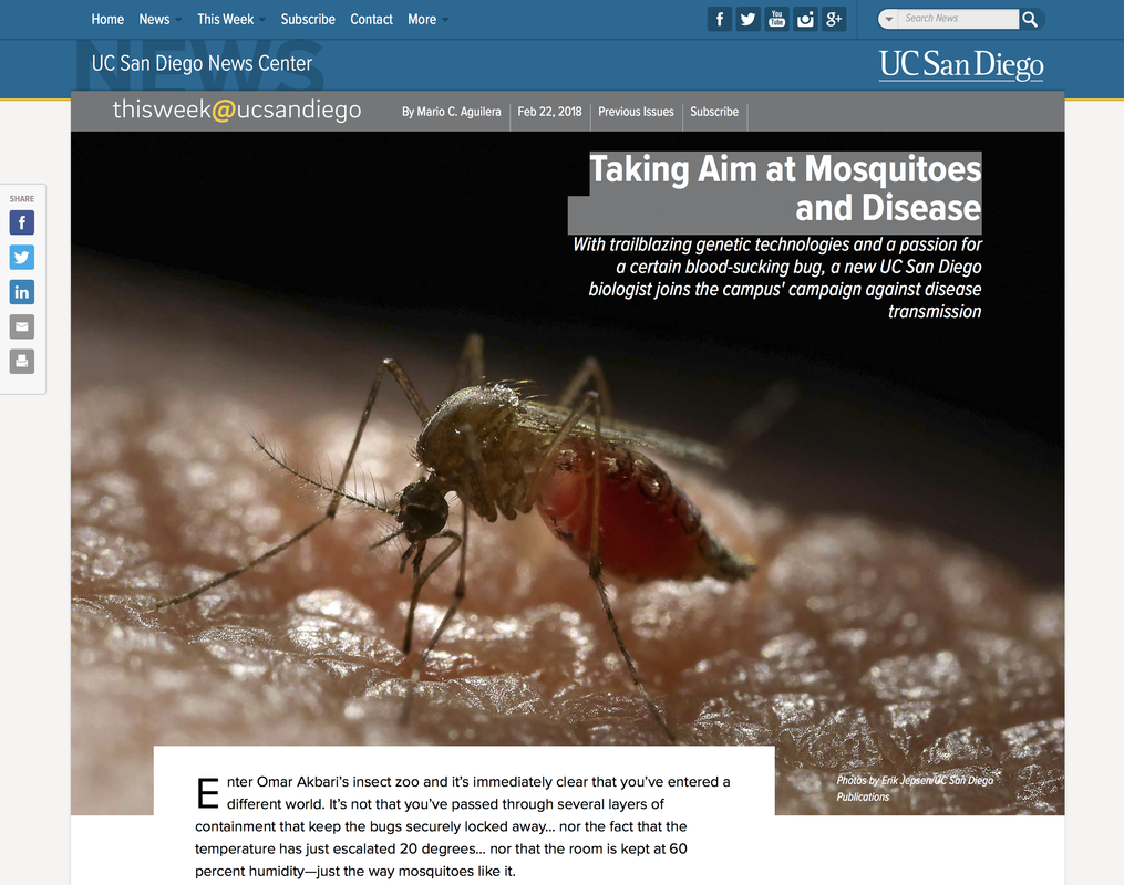 Taking Aim at Mosquitoes and Disease - THE AKBARI LAB